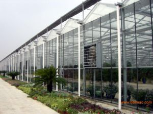 Glass Greenhouse with Mobile Cooling Pad and Heating System