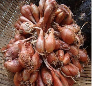 Fresh New Shallot with High Quality pictures & photos