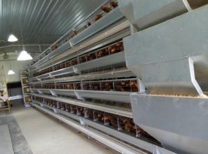 Poultry Farm Design Chicken Cage for Poultry pictures & photos