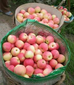 High Guality Gala Apple to Bangladesh 150-198 pictures & photos