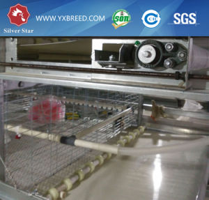 Best Hot Galvanized Chicken Cage From China Silver Star pictures & photos