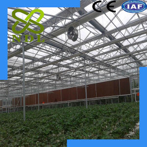 Hot Selling Low Price Anti Ultraviolet Strong PC Board Greenhouse pictures & photos