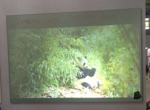 Wall Mounted Glass Projection Screen with Magnetic Function pictures & photos