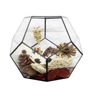 Fancy Geometric Glass Terrarium for Flower pictures & photos