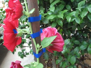 Garden Tape and PVC Tie Tape Agricultural Tape Reach Certificate Supplier pictures & photos