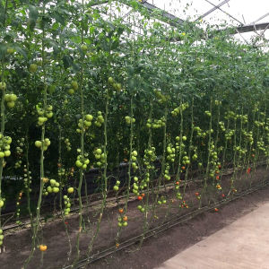 High Quality Multi Span Agricultural Film Greenhouse for Sale pictures & photos