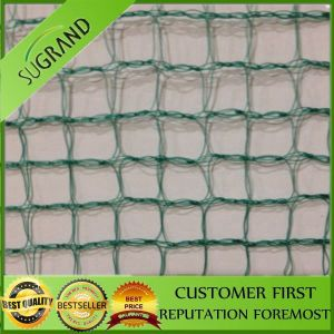 2016 New Anti-Bird Netting, Anti Bird Net for Catching Birds pictures & photos