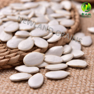 Hot Sale Organic Gws Pumpkin Seeds with Grade AA for Bakery pictures & photos