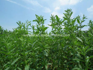Steviosides Rebaudioside-a CAS No 91722-21-3 Stevia Extract pictures & photos