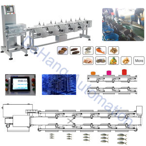 Weight Sorting Machine for Seafood with Waterproof Structurer pictures & photos
