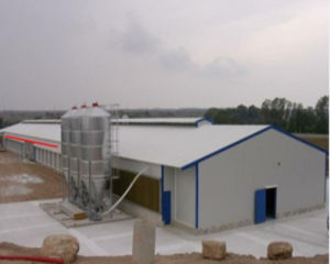Automatic Poultry Farming Equipment for Chicken pictures & photos