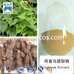 Herb Medicine Natural Polygonum Multiflorum