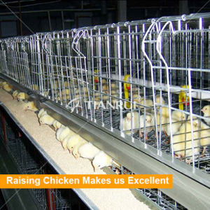 High quality Top Selling Chicken Layer Cage For Small Chicken pictures & photos