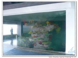 Large Acrylic Panel for Wall Mounting Aquarium pictures & photos
