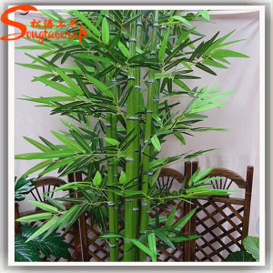 Professional Manufacturer Decorative Lucky Bamboo Plant Tree pictures & photos