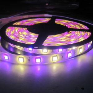 Four Color SMD5050 LED Strip Light pictures & photos