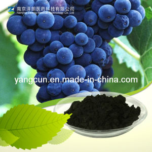 Natural Bilberry Extract 25% Anthocyanidins pictures & photos