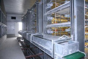a Type Automatic Poultry Farm Layer Cage pictures & photos