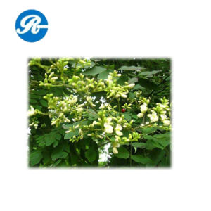 Quercetin with Plant Extract pictures & photos