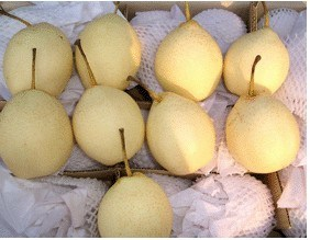 Fresh Ya Pear/Chinese Fruits of Good Quality pictures & photos