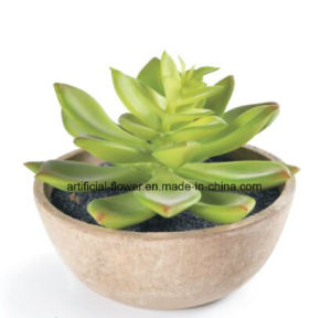 China Supplier Artificial Succulent for Decoration