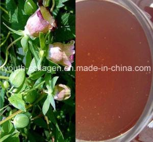 Honey,Top 100% Natural Codonopsis Herbal Honey, Rare, Precious,Anticancer,Antiagingno Pollution,No Heavy Metal,No Antibiotics, Hemopoiesis,Blood Nourish Food pictures & photos