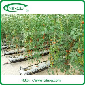 Substrate Hydroponic System for Cherry Tomato pictures & photos