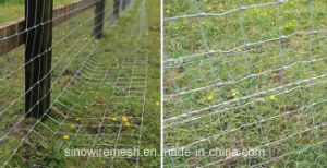 Sailin Hexagonal Wire Mesh Rabbit Netting pictures & photos
