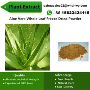 Aloe Vera Whole Leaf Freeze Dried Powder Plant pictures & photos