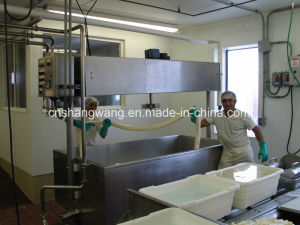 Turn-Key Hard Cheese Production Line pictures & photos