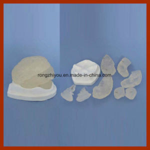 Factory Supply Model Natural Size Transparent Brain Model (8 pieces) for Medical Solutions