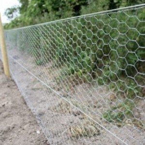 Hexagonal Fencing Wire Netting for Farm Fence pictures & photos