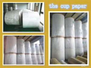 One/Two Side PE Coated Paper