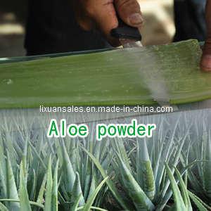 Natural Aloe Powder Barbaloin