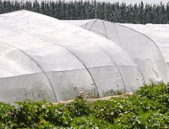 Greenhouse Cover Anti Insect Aphid Net pictures & photos