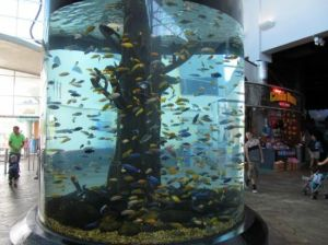 Cylinder Shape Acrylic Fish Tank pictures & photos