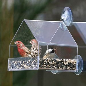 Unique Bird Feeders of Acrylictriangle Bird Feeders pictures & photos