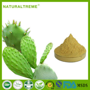 FDA Approved High Quality Natural Cactus P. E. pictures & photos