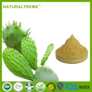 FDA Approved High Quality Natural Cactus P. E.