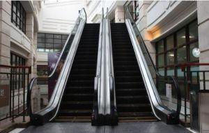 Isuzu Escalator pictures & photos