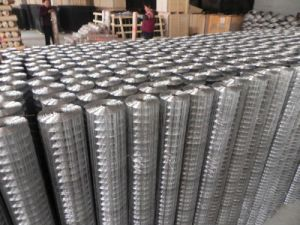 ISO 9001 Galvanized Welded Wire Mesh pictures & photos