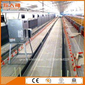 Automatic Poultry Equipment for Breeder Shed with Prefab House Construction pictures & photos