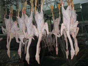 Chicken, Duck, Goose Butcher Equipment pictures & photos