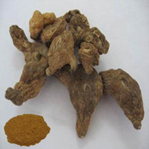 Traditional Chinese Herba: Tuckahoe Extract pictures & photos