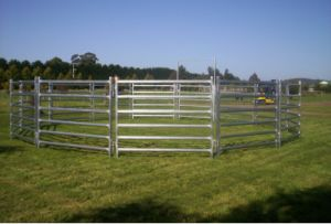 Oval Rail Cattle Panel pictures & photos