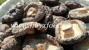 Dried Smooth Shiitake Mushroom 1kg Bag pictures & photos