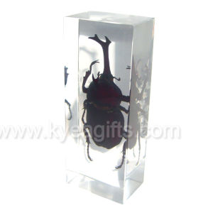 High Quality Insect Amber Paperweight