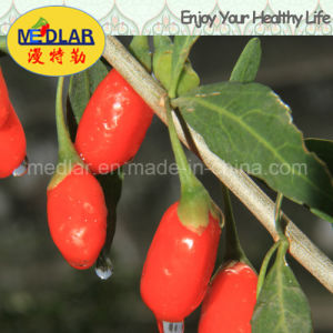 USDA Certified Medlar Health Food Red Wolfberry pictures & photos