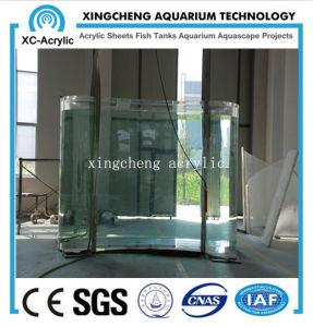 Transparent Acrylic Aquarium pictures & photos