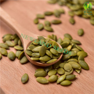 Most Popular and Hot Sale Pumpkin Seeds Kernels Grade AA